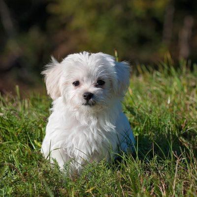 nature-animal-dog-pet-33053